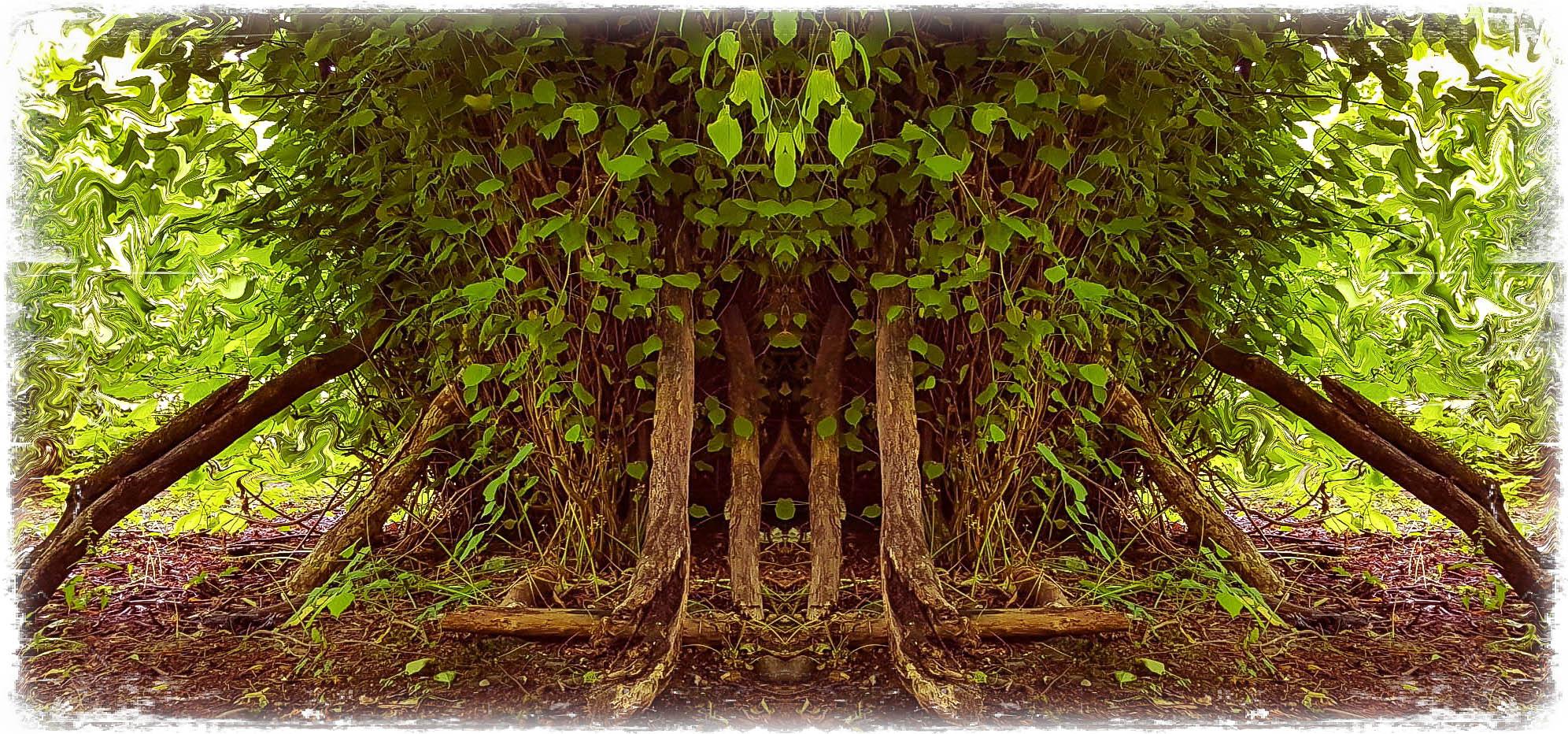 FOREST GODS (GobophotographyMiff Morris edit)